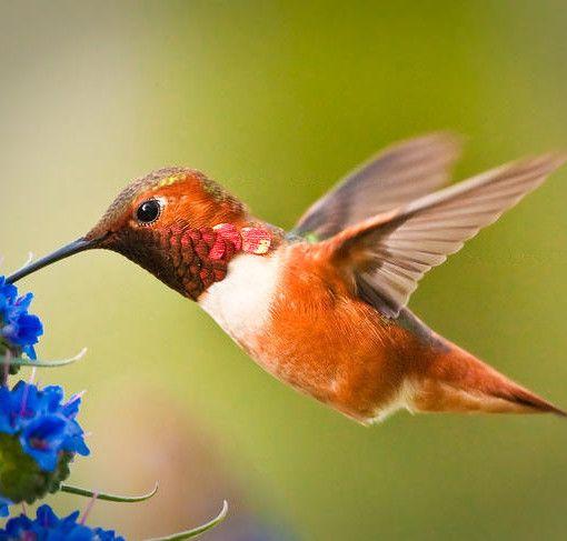 Alice Beija-Flor, uma menina que queria virar um passarinho e deixou de comer.