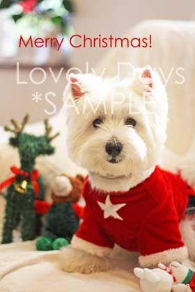 新作♪ウェスティのクリスマスカード - Lovely Days