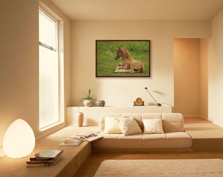 https://www.etsy.com/listing/398256521/redhead-foal-digital-photo-instant
