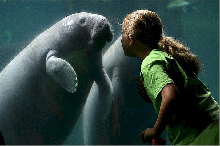 Meet your new best friends! Save $7 Off Admission Tampa'sLowryParkZoo http://www.destinationcoupons.com/florida/tampa/tampa-zoo/tampa-zoo-coupons.asp #Tampa #Zoo #Coupons #Deals Visit the #Manatees