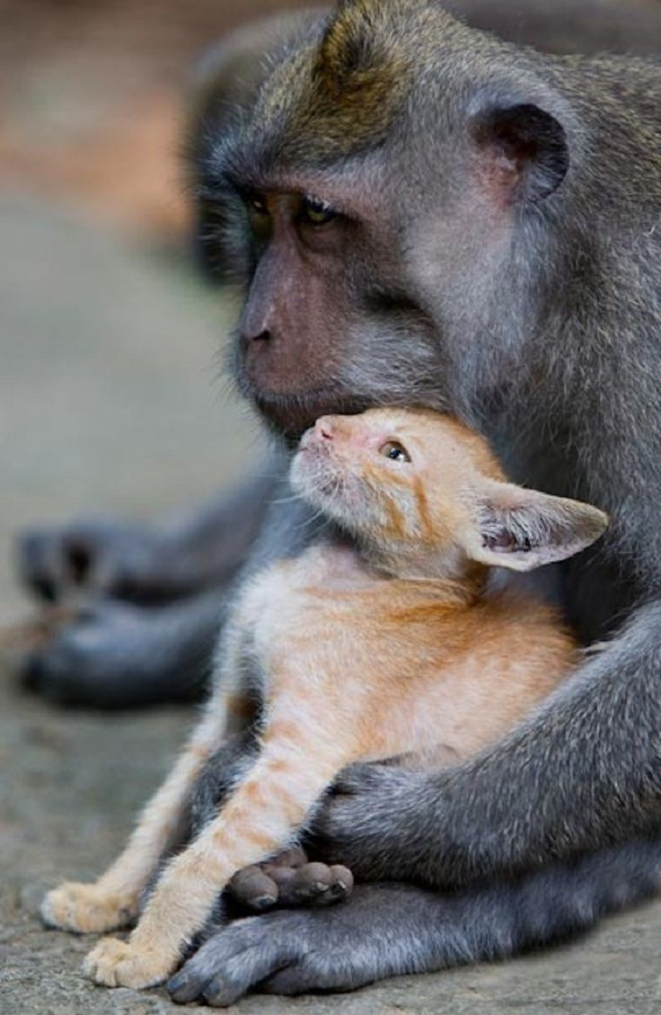 17 Best ideas about Unusual Animals on Pinterest | Rare ...