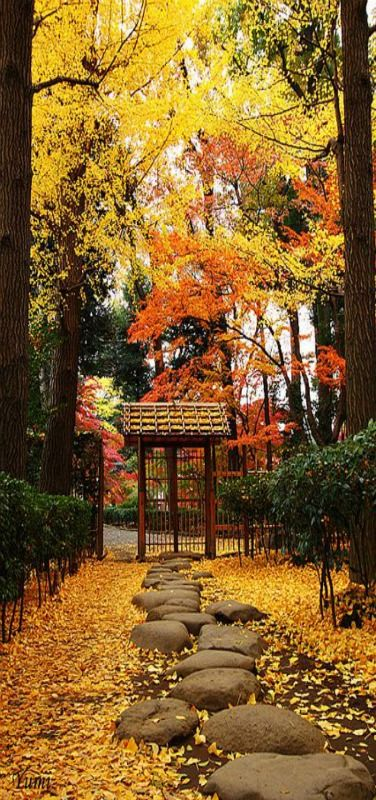 Stepping Stones, Autumn leaves, Tokyo, Japan