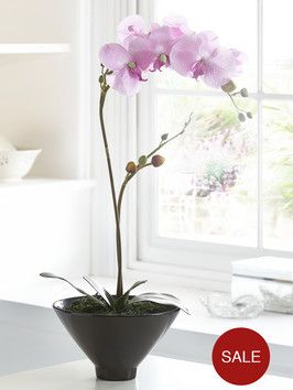 http://www.very.co.uk/pink-orchid-in-black-pot/1374126558.prd