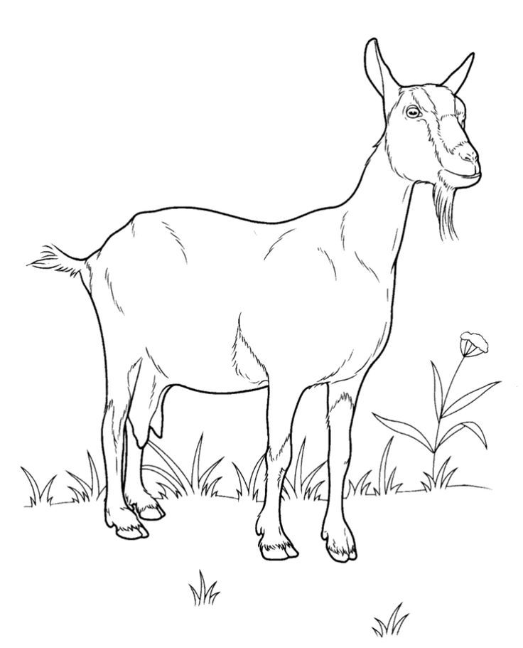 Domestic Animals Goat Coloring Pages