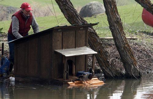 Best 25 Duck House Ideas On Pinterest Duck Coop