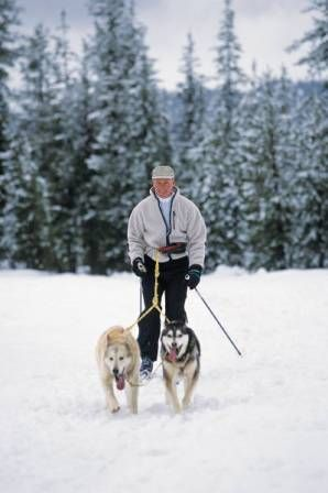 Skijoring...cross-country skiing with your dogs!