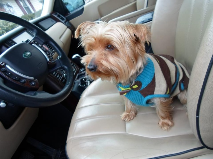 17 Best Images About Dogs Love Land Rovers On Pinterest