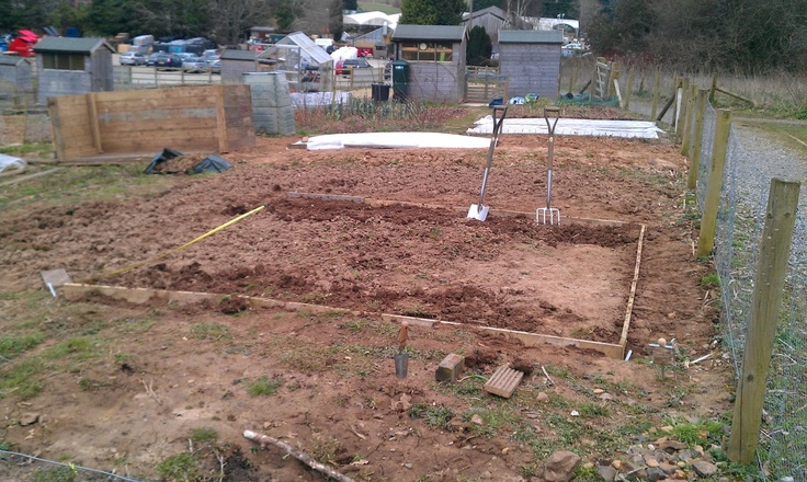 Making progress with clearing my allotment. Using pallet boards to edge my beds.