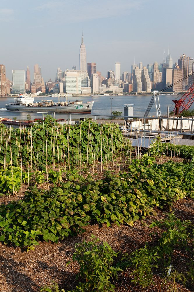 More Rooftop Farms in Cities are needed more than ever.