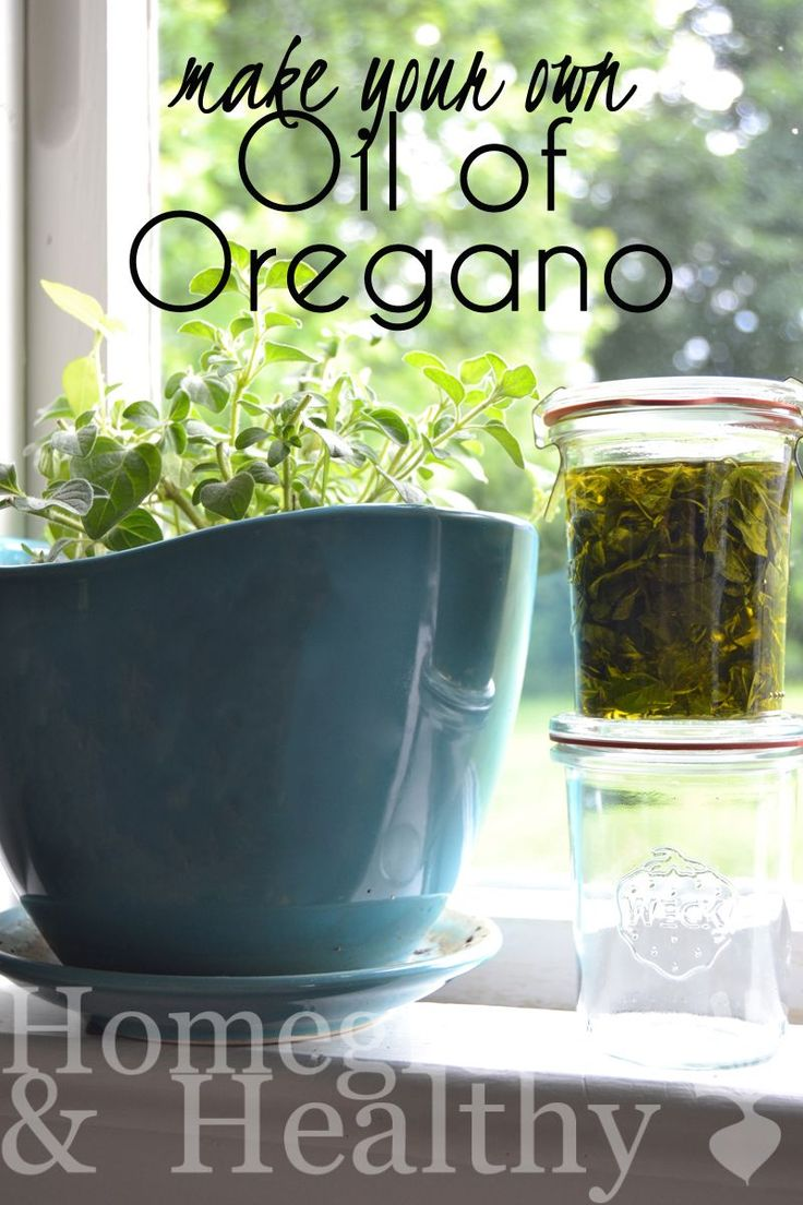 Making your own oil of oregano is really easy and incredibly cheap!