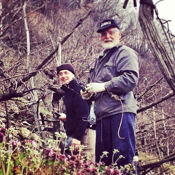 ecco i vignaioli all'opera nelle campagne trentine, viva i #vignaioli del #trentino!