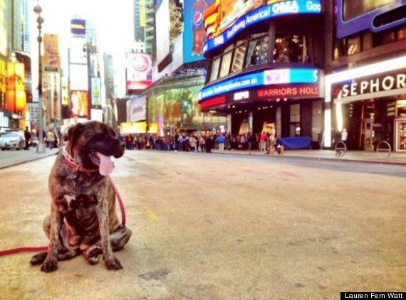 Owner Creates A Bucket List For Her Dog With Terminal Cancer (And It Will Make You Tear Up)