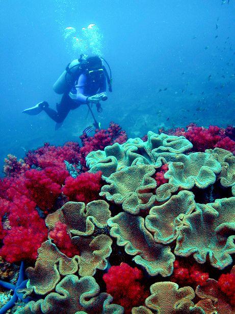 Diving in Miri, Sarawak, Malaysia
