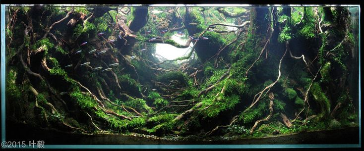 2015 aga aquascaping contest entry 262 more aga aquascaping aquascape ...