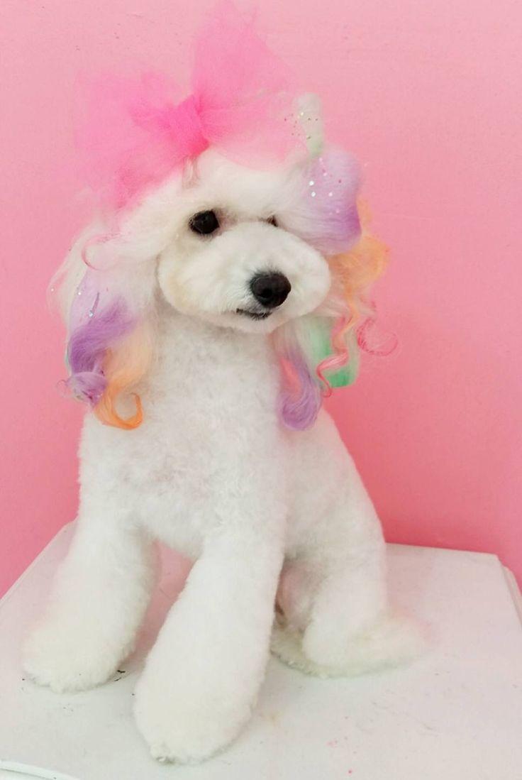 -repinned- More beautiful creative dog grooming