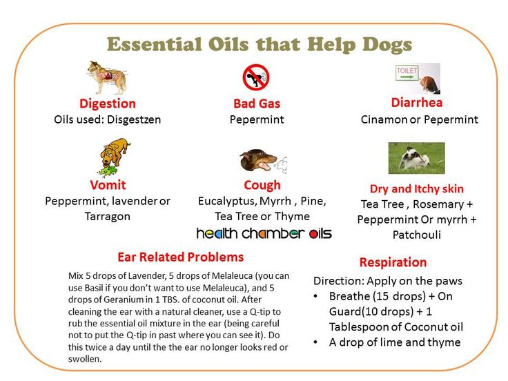 Essential Oils That Help Dogs Digestion Bad Gas