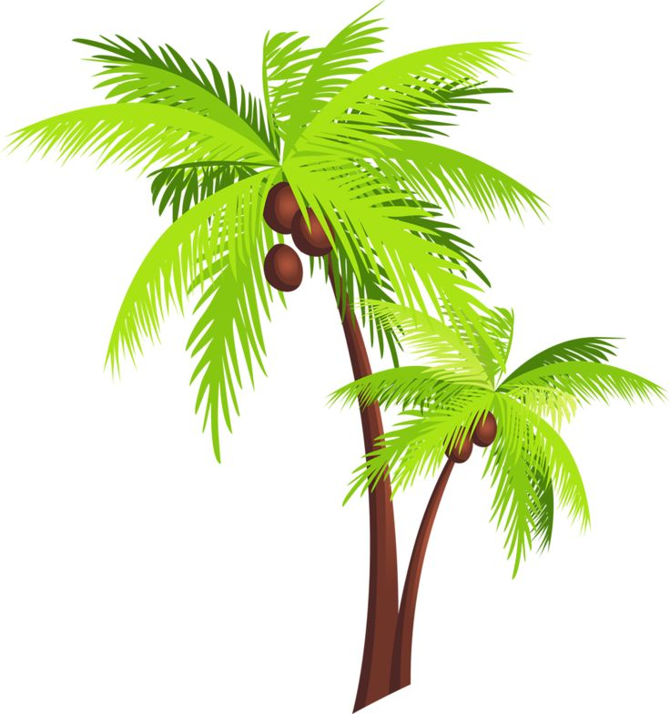 arbres page 70 beach pinterest drawing trees  clip clip art palm trees free clip art palm trees sunny