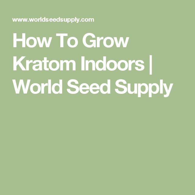 How To Grow Kratom Indoors | World Seed Supply