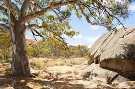 Image result for australian outback scenery