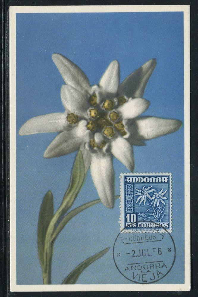 Andorre Espagnol - Carte Maximum 1956 , Fleur