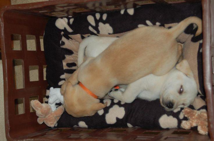 Wopke en Lieve 6 weken oud