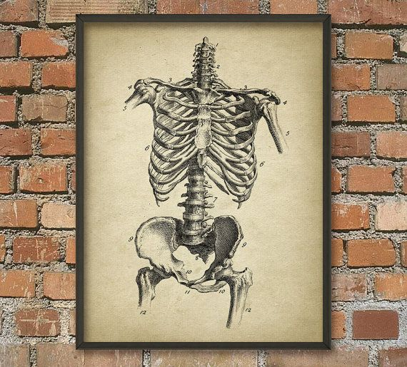 Human Skeleton 3  Human Anatomy Wall Art Poster  Human Bone