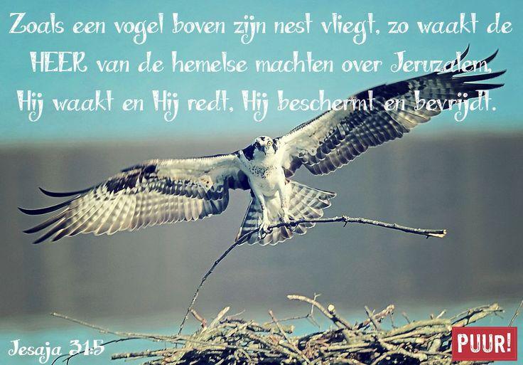 Zoals een vogel boven zijn nest vliegt, zo waak de HEER van de hemelse machten over Jeruzalem. Hij waakt en Hij redt. Hij beschermt en bevrijdt. – Jesaja 31:5