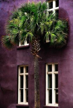 Palm & purple