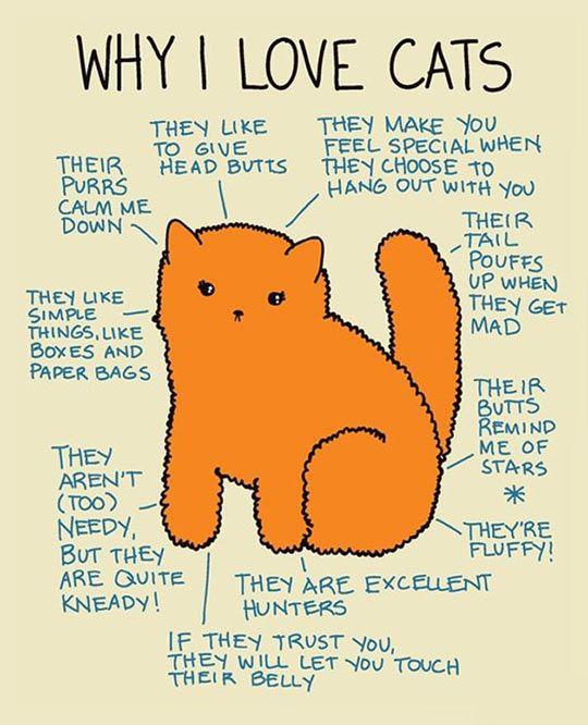 Why I love cats