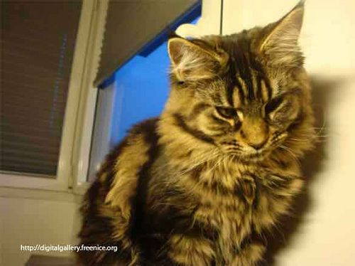 cat       mancoon cat  Posted by pcrif  on 2009-03-17 16:30:27      Tagged:  , cat , menkoun , chat , mancoon  - http://newsyork.gq/cat-149/