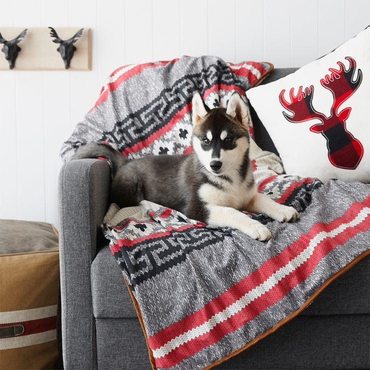 Les chiots, c'est mignon. Les bébés Husky? Encore plus! Notre ami poilu est si confortable dans notre nouvelle collection de décoration Canadiana! #DécorPourLaMaison #DécorationAbordable #DécorationPourLeSalon #AccessoiresPourLaMaison #coussins #DécorAutomnal #ChiensDInstagram #chiots #husky
