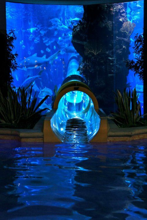 Water Slide through Shark Tank at the Golden Nugget, Las Vegas Quite possibly the most terrifying thing ever?... What if the sharks got out?