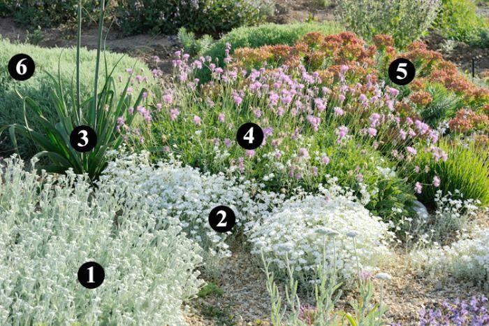 Plantas que soportan heladas y son resistentes a la sequía para crear un jardín sostenible y de bajo mantenimiento