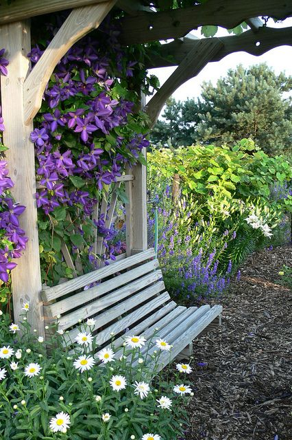 garden bench with clematis as backdrop