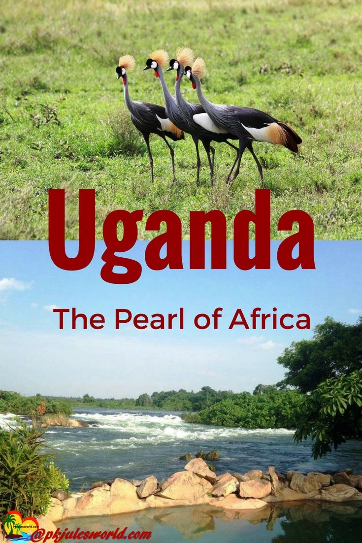 Find this pin and more on travel uganda the