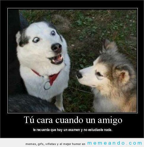 Memes de animales | Memes Para Facebook en Español - MEMEando.com