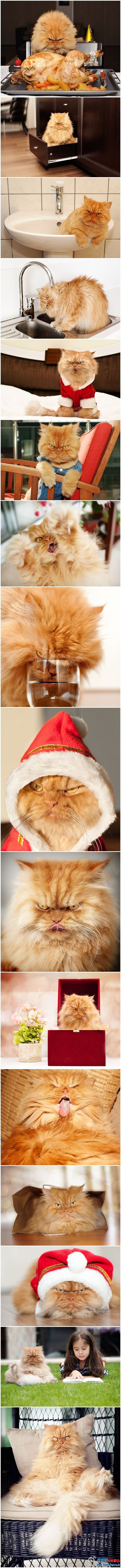 Hahaha poor kitty looks so pissed and insane but I'm sure he/she is a ball of sweetness