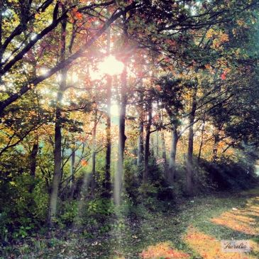 """Washed by Light"" The story behind this picture: https://www.facebook.com/photo.php?fbid=520253938053170&set=a.507932875951943.1073741838.481203088624922&type=1&theater   #photography #fotografie #print #landschap #bomen #trees #bos #forest #groen #green #yellow #gold #bladeren #blad #leaf #leafs #herfst #autumn #fall #najaar #flevoland #almere #natuur #decoratie #decoration #interieur #interior #artprint #canvas #gift #kado #laaurelia #aurelia #iphone #indiansummer #october"