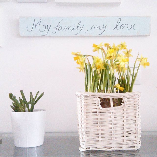 Primavera dentro de casa. Agora só falta mesmo lá fora. #spring #bulbs #estouapaixonadaporbolbos #bolbos #primavera #words #decor #decoracao #white #suculents #suculentas