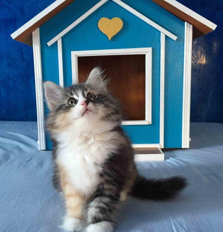 Casette in stile vittoriano per gatti