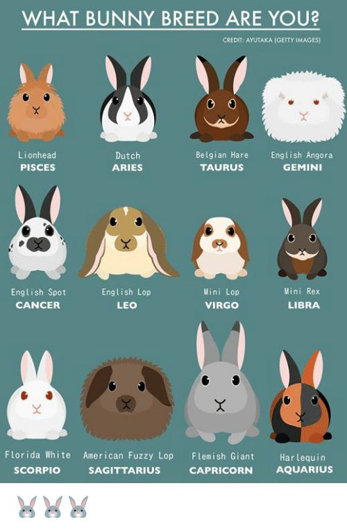 Memes, American, and Aquarius: WHAT BUNNY BREED ARE YOU? CREDIT: AYUTAKA (GETTY …