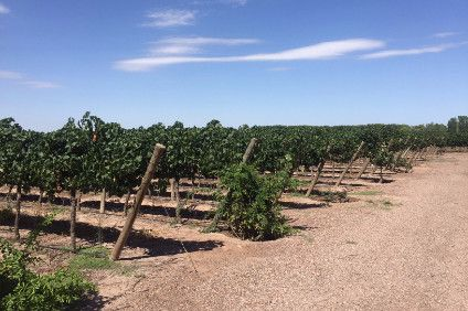 Chinese wine producer Yantai Changyu Pioneer Wine Co is to buy three Chilean vineyards in a new joint venture, a report has said.