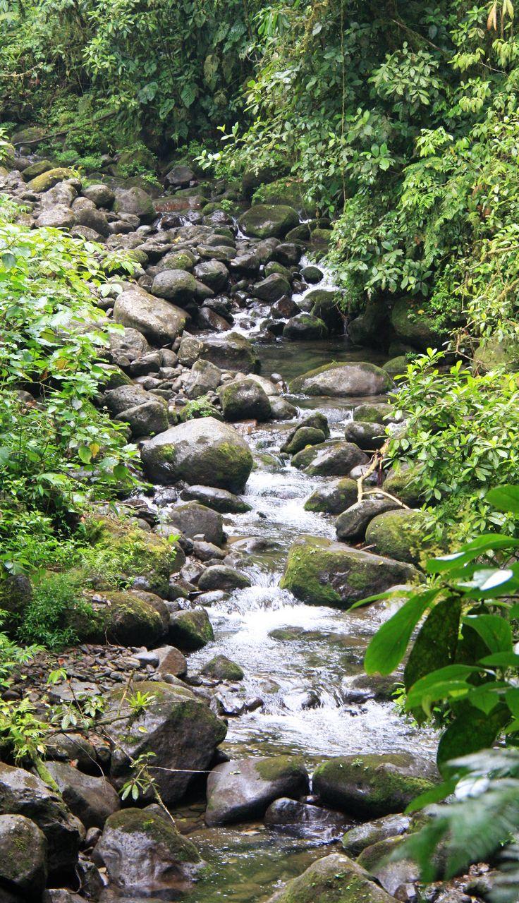 Wenn die Natur dir den Weg weist - in Costa Rica