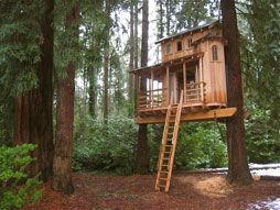 Tree House Plans For Two Trees 47 best treehouse images on pinterest | treehouses, kid tree
