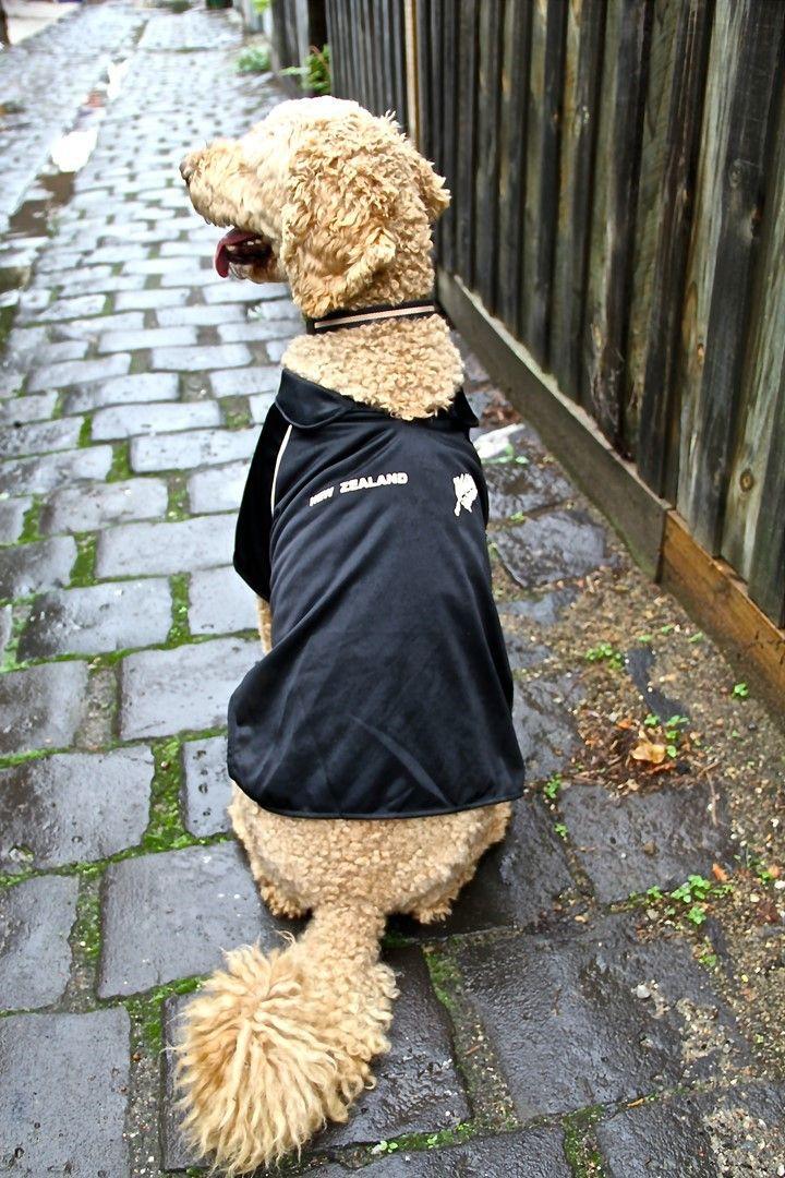 New Zealand Kiwi dog jersey