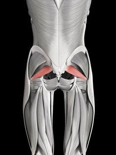 Piriformis syndrome is a condition caused by repetitive motion leading to pain in the buttocks, sometimes radiating down one or both legs (sciatica). Learn more about piriformis syndrome, including its symptoms and how to treat it, in this article.