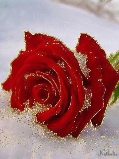 flores-dia-de-la-madre.gif 240×320 píxeles