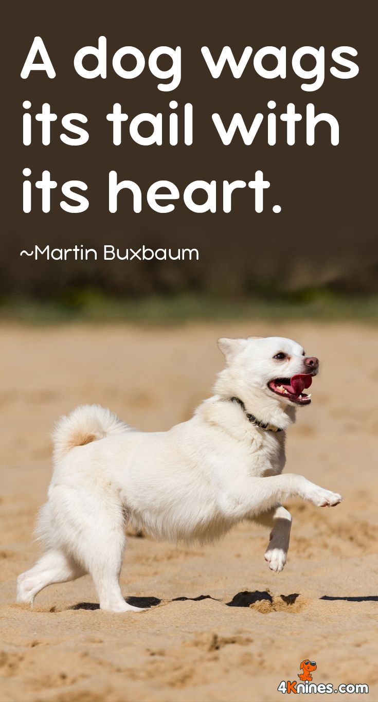 51 best Dog Quotes images on Pinterest