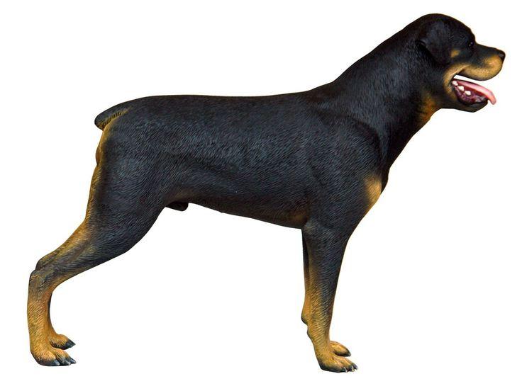 En este artículo te mostramos las nuevas réplicas de perros que hemos incorporado en nuestra seccion de animales domésticos para que puedas tener más variedad si buscas decorar tiendas de animales domésticos