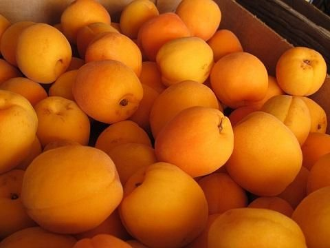 Apricot Nutrition: 3 Surprising Health Benefits Of Apricots. Apricot season: End of May to Mid-June or Mid-July